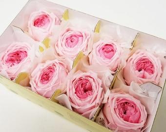 8 pink azalea, Garden rose catherine duo, preserved roses, wedding roses, pink roses, preserved flowers, home decor, flower arrangements