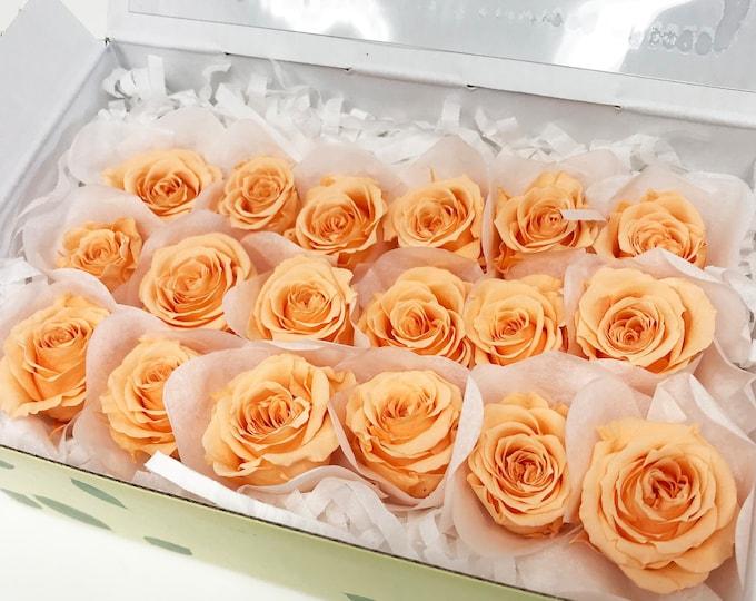 Sherbet orange, preserved roses, 18 piccola, orange roses, floral arrangements, preserved flowers, home decor flowers, wedding decor roses