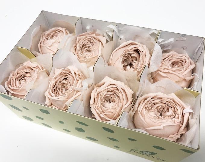 Nude pink, Garden roses catherine, preserved roses, pink roses, preserved flowers, home decor, wedding decor, wedding, floral arrangements