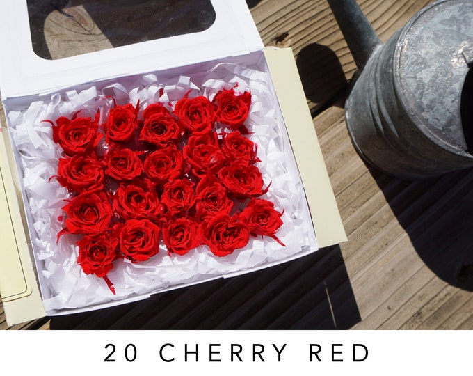Cherry red, preserved roses, red roses, preserved flowers, home decor, wedding decor, real roses, everlasting rose, wedding, micro roses
