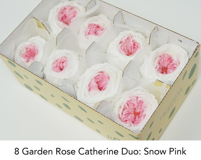 Snow Pink, 8 Garden rose catherine duo, preserved roses, wedding roses, pink roses, preserved flowers, home decor, flower arrangements