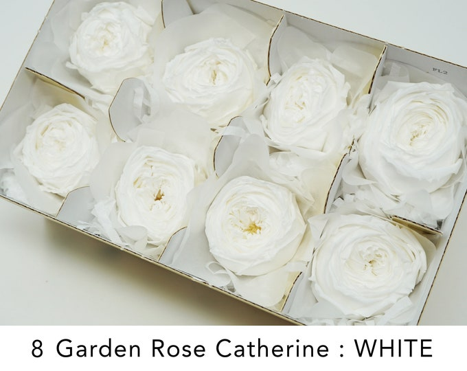 White, Garden rose catherine 8 roses, wedding roses, preserved roses, preserved flowers, white roses, floral arrangements, home decor
