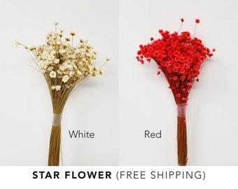dried flowers, star flower, White flowers, preserved flowers, wedding flowers, wedding decor, wedding craft, home decor, floral arrangements
