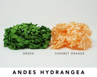 20g Hydrangea, Green, Sherbet Orange, Andes hydrangea, hydrangea, preserved flowers, wedding decor, home decor, floral arrangements