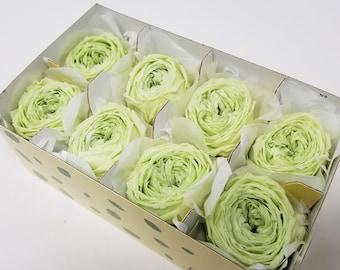 garden rose, Citrus soda, catherine duo, green roses, preserved roses, preserved flowers, floral arrangements, big roses, wedding decor