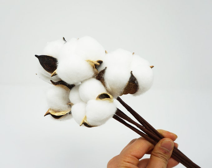 10 pcs of dried cotton flowers, cotton balls, cotton, dried cotton stalks, cotton stems, preserved cotton stem, dried flowers, white flowers