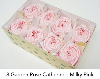 8 Milky Pink, Garden rose catherine, preserved roses, pink roses, preserved flowers, home decor, wedding decor, wedding flowers