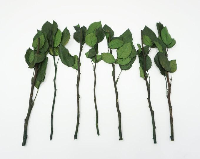 7 preserved rose stems, real stems, rose stems, preserved flowers, wedding decor, home decor, roses, floral stems