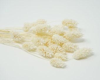 phalaris DRIED, White, dried flowers, preserved flowers, wedding decor, home decor, pin flowers, dried grass, wedding boutonniere, phalaris