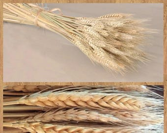 Lot of 50 PC's Naturally dried wheat dried decor wedding decorations offer flower vase plants wheat