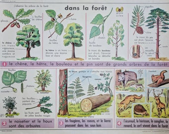 Vintage French School Botanical Poster With Flower Illustration
