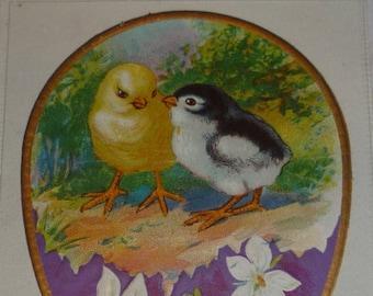 Cute Chicks and Violets Antique Nash Easter Postcard