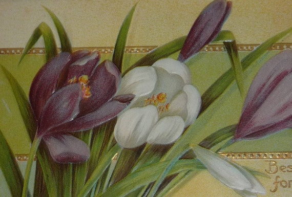 Purple And White Crocus Flowers Antique Easter Postcard Etsy