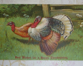 Two Turkeys in the Grass Antique Thanksgiving Postcard