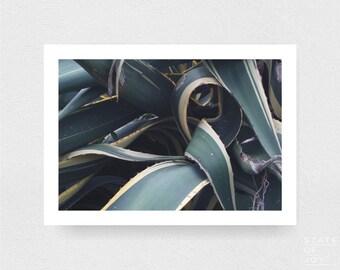 island photograph - coastal surf decor - cactus - nature - wall art - landscape - square prints | LARGE FORMAT PRINT