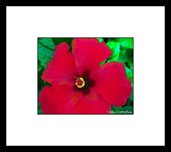 Red Hibiscus Macro Photo Flower Fine Art Wall Decor Nature | Etsy