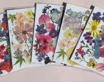 """Pressed flowers in 5"""" x 7"""" packs, each with enough flowers to make a beautiful arrangement. All natural colors."""