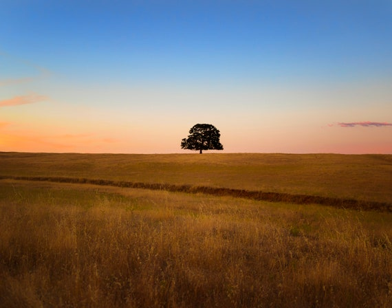 One with Nature (prints) the single tree on Millville Plains Road Northern California