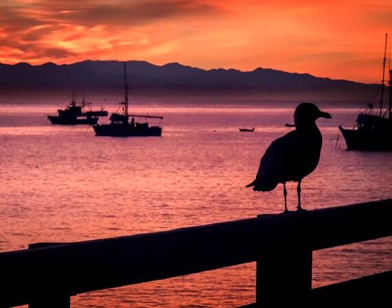 On the Fence (Prints) Seagull on Harford Pier Avila Beach California