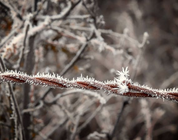 Frosty (Prints) Hoar Frost on a barbed wire fence
