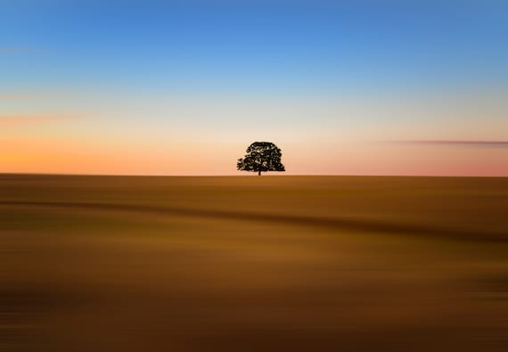 Focus on one thing at a time (CANVAS) the Lone tree Millville Plains Road at sunset