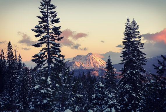 In the Spotlight  (CANVAS) Black Butte in Northern California snow covered trees