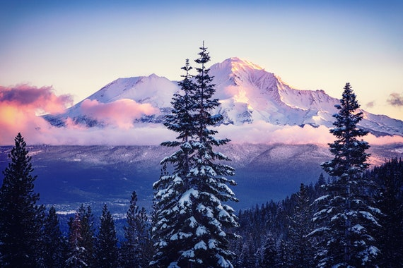 Glorious Beginning  (CANVAS) Mt. Shasta  in Northern California snow covered trees