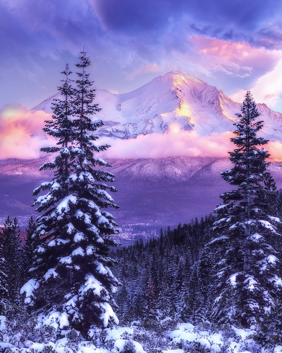 Magical Winter (Prints)  a sunrise on Mt. Shasta with snow covered trees