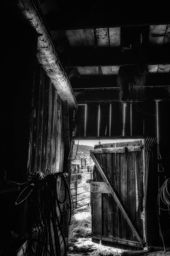 Did You Grow up in a Barn (Metal Panel) looking out an open barn door in black and white