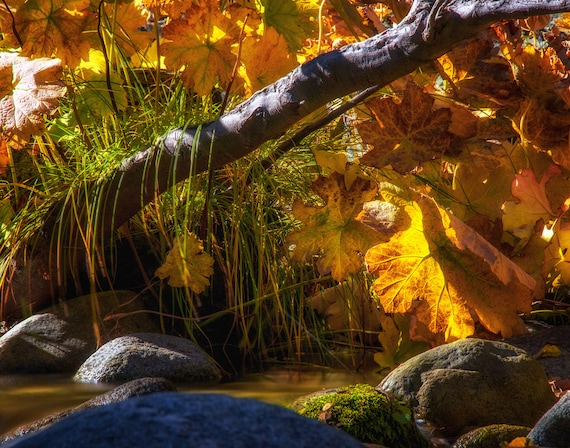 Coloring With the Sun (prints) Brandy Creek with fall colors Whiskeytown Lake