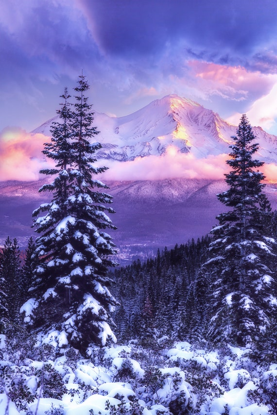 Magical Winter (Metal Panel) a sunrise with Mt. Shasta with snow on the trees