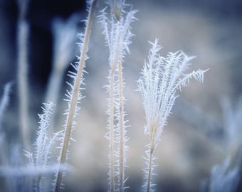 Cold  (Metal Panel) Hoar Frost on weeds