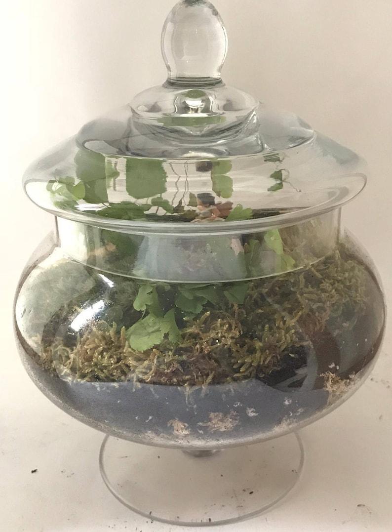 Large Moss Terrarium Kit Etsy