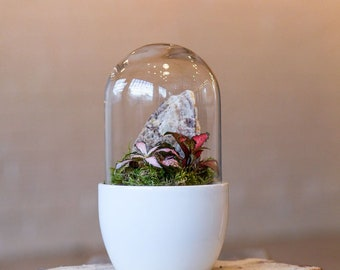 Nurture by Lusan: Self-Care Terrarium kit set