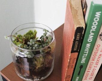 Mini Terrarium Glass Pot Kit