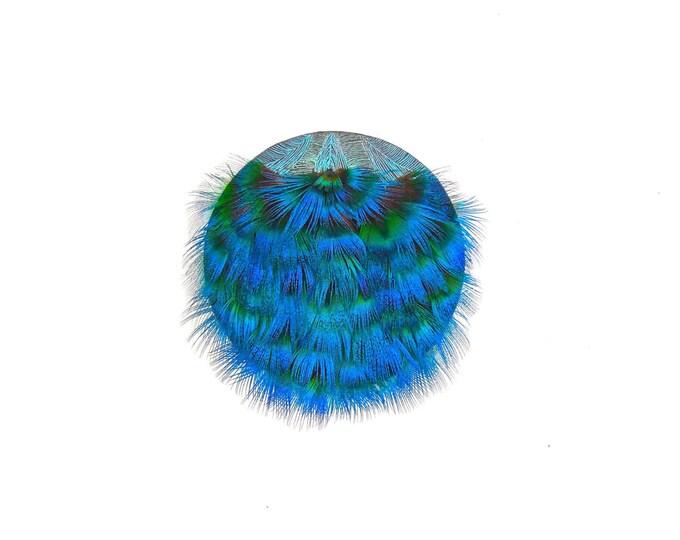 Peacock feather sculpture