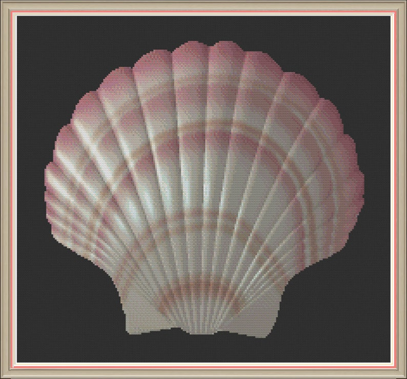 Seashell 2 Cockleshell Beach Shell Scallop Shell image 0