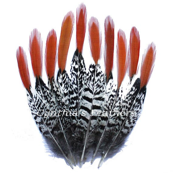 """Fly tying 50 Cock Pheasant Wing Feathers 6/"""" Crafting 7/"""""""