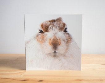 Mountain Hare Blank Greetings Birthday Card