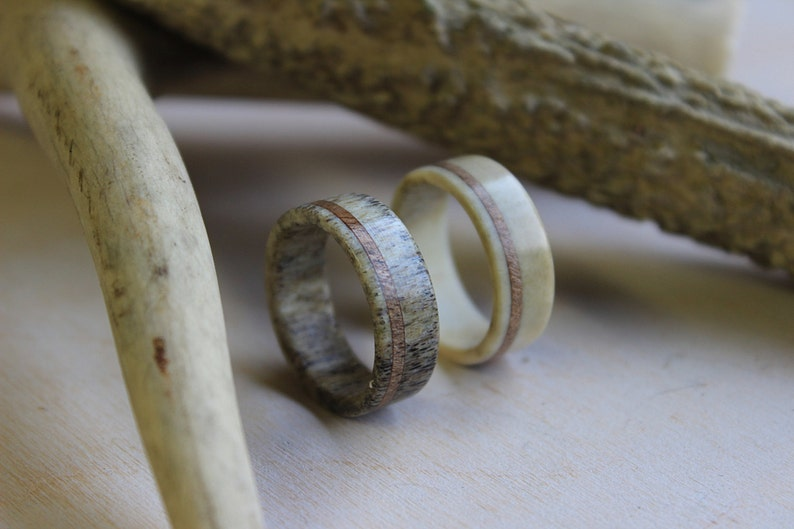 White Antler Ring Deer Antler Ring with Oak Wood Inlay made from Fine Selected Antler