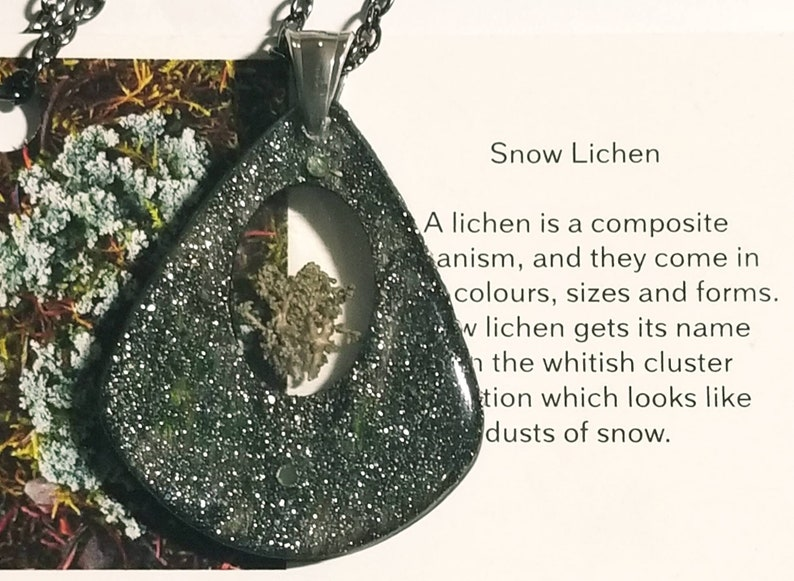 real arctic lichen inside Necklaces in a wooden silver teardrop