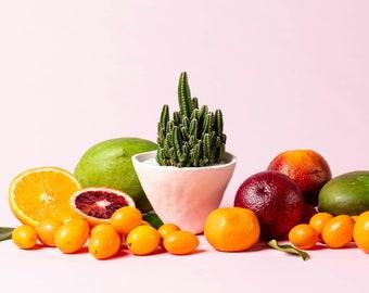 Lorenzo Cactus Plant + Ceramic Planter // Cactus // Clay Planter // White Planter // Live Cactus Plant // Modern Planter // Handmade Planter