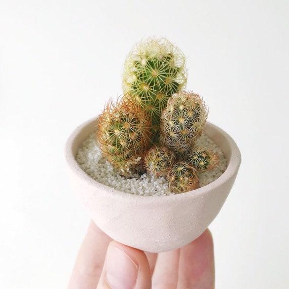 Mini Cactus Garden Planter Handmade Ceramic Planter Mini | Etsy