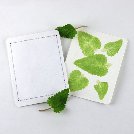 Catnip Card, Personalize for Gifts