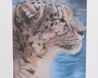 Snow Leopard - Limited Edition Mounted A3 print of beautiful snow leopard
