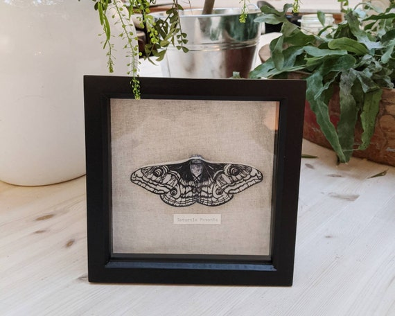 Moth Entomology - Paper Sculpture - Saturnia Pavonia, Emperor Moth - Faux taxidermy