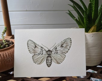 Watercolour Moth Print