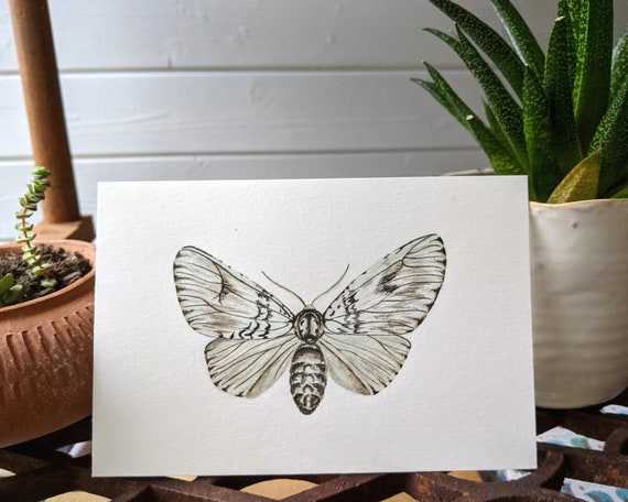 Light Moth - Watercolour and Ink original, night butterfly,