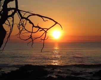 Beach Sunrise With Tree, digital photo
