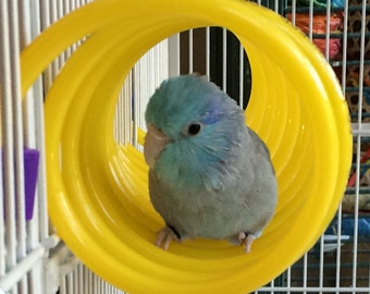 Curly Q - Small Bird Toy and Perch - Great for Budgies, Parrotlets and Lovebirds
